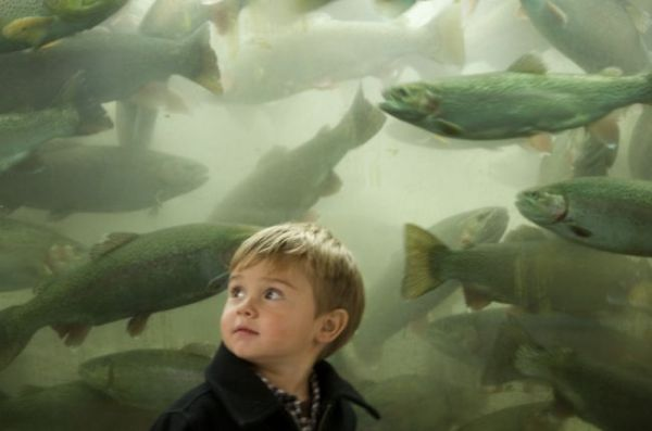 Youngsters get their first close-up look at river trout when they descend the stairway at the hatchery.