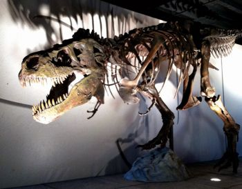 A traveling exhibit at the Washington Pavilion features a replica of Sue the T. rex.