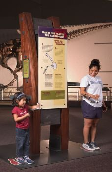 "Interactive pod 2, ""Maybe Sue Played the Accordion?"" © The Field Museum"
