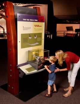 Interactive pod 4, 'This Tail was a Tool.' © The Field Museum