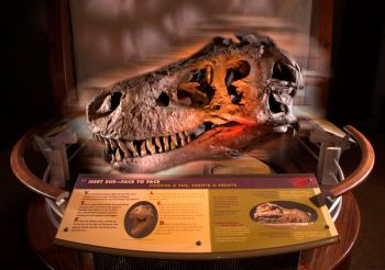 Interactive pod 9, 'Meet Sue Face to Face.' © The Field Museum