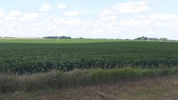 A good-looking soybean field near Willow Lake.