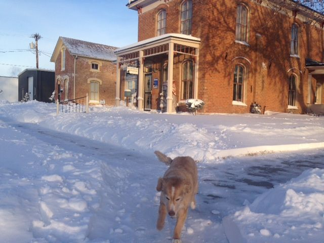 Even our office dog, Yeller, is ready for Spring.