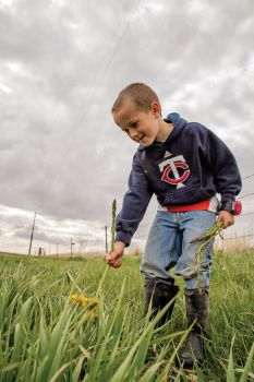 Peyton Bischoff picks wild asparagus on his grandparents' farm north of Huron. Photo by Abby Bischoff.