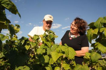 Jeff and Jolene Stewart survey the aronia berry crop at their farm, Stewarts Aronia Acres, near Wagner.