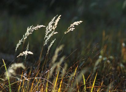 Fire ecologist Mary Lata says South Dakota s grasslands are often overlooked in autumn, but visitors to our national parks are often surprised at their beauty this time of year.
