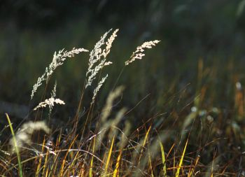Fire ecologist Mary Lata says South Dakota's grasslands are often overlooked in autumn, but visitors to our national parks are often surprised at their beauty this time of year.