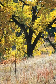 Grassland colors are accentuated in autumn. 'You've still got some flowers, mostly yellows and purples. And then after the frost you lose the flowers, but the grass colors start to jump out even more,' Lata says.