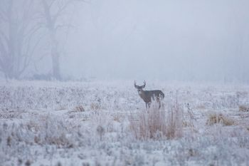 Whitetail buck just east of Houghton.