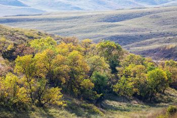 Fall colors on the flanks of the Cheyenne River breaks near Bridger.