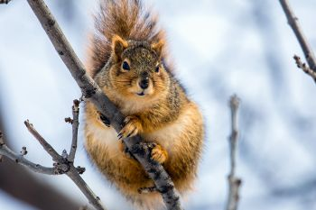 A curious (and quite plump) squirrel at the Big Sioux Recreation Area.
