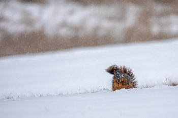 Snow or no snow, a squirrel's gotta eat.