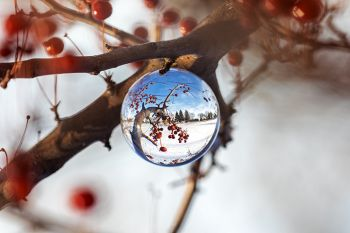 Lens ball in a tree with red berries on the edge of Covell Lake in Sioux Falls.