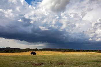 Rain clouds forming over Custer State Park.