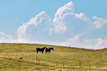 Horses, pasture and clouds as seen from the road south of Strandburg.