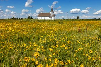Duncan church with wildflowers in rural Buffalo County.