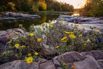 Late wildflowers on the rocks of Palisades State Park near sunset.