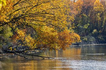 Fall adorned branches overhanging the Big Sioux River north of Sioux Falls.