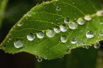 Rain on leaf, Dells of the Big Sioux.