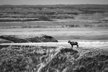 My photography professor said one of the most beautiful things to depict in black and white is prairie grass. You can see why in this image taken at Badlands National Park.