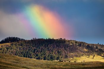 Rainbow and bison as seen from Lame Johnny Road in Custer State Park.