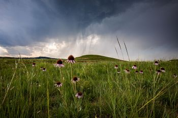 Black Samson under a stormy sky at Custer State Park.