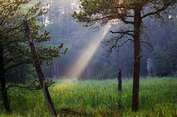 A ray of evening light near Badger Hole in Custer State Park.