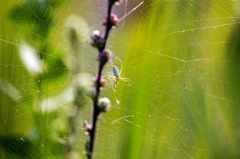 A spider's lair amongst the wildflowers and grass at Lake Herman State Park.