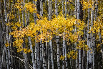 Autumn color at Custer State Park.