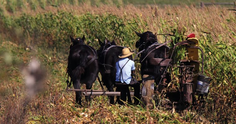 Motorists driving Highway 18 near Tripp have learned to watch for the horse-drawn buggies of several Amish families who live nearby.