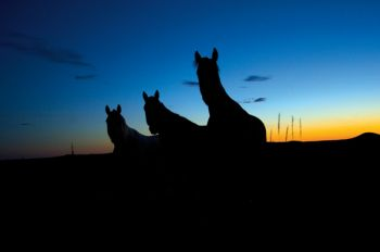 Horses at dusk on the Standing Rock Indian Reservation.