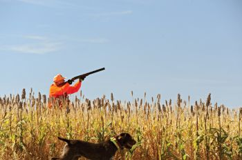Hunters cherish the stories from their South Dakota pheasant hunts just as much as the birds themselves.