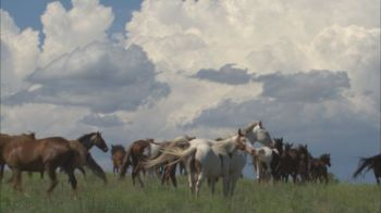 Over 500 wild mustangs reside at the Black Hills Wild Horse Sanctuary.
