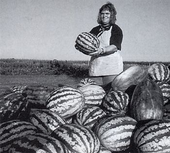 Dorrie Tollefson credits unique soil conditions for giving Forestburg melons their sweetness.