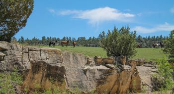 Mustangs from the Black Hills Wild Horse Sanctuary watch from the bluff.
